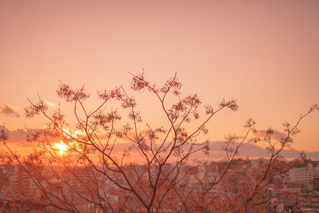 夕陽の光はロマンティック、それを照明にいかす